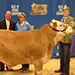 2015 Dixie National Sale of Champions